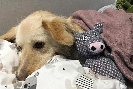 Ostry ból u kota i psa
