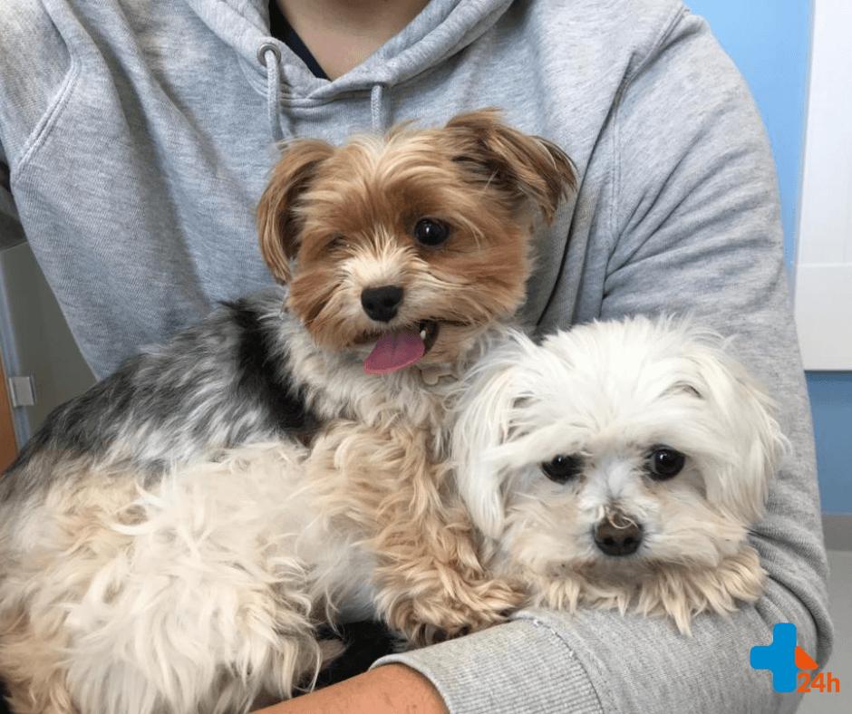 Alergia u psów