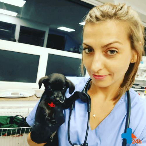 Czym jest choroba Cushinga u psów  – tłumaczy endokrynolog weterynaryjny