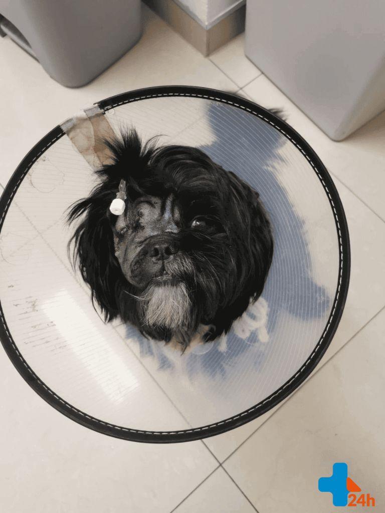 Intensywna terapia zwierząt